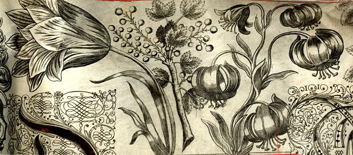 Floral border from a Royal Letters Patent, 1670 (ETO/16)