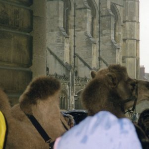 Cleo, the fundraising camel. Holy Trinity's spire is visible in the distance. (KCAR/10/26; photographer Alison Carter)