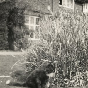 EM Forster's cat Verouka at their new home in West Hackhurst, 1924. (EMF/27/362)